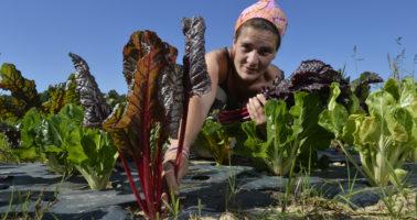 UNITERRES : projet de solidarite locale pour soutenir les petites expolitations agricoles