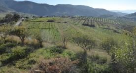180223_FDNC Malaga EP Bobalen Ecologico 05